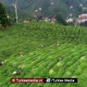 Duitsland grootste importeur van Turks genotmiddel