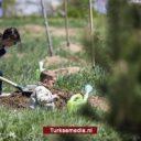 Turkije plant 4,3 miljard bomen in zestien jaar
