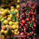 Turkije wereldleider in deze vier smaakvolle producten