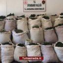 Turks leger vindt 1,3 miljoen wietplanten en ton drugs in Diyarbakır