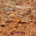 9 miljoen jaar oude fossielen gevonden in Turkije