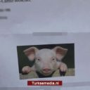 Moskee ontvangt racistische varkensbrief