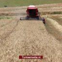 Turkije verdient miljarden aan tarwe-export