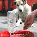Turkije verplicht alle gemeenten zwerfdieren te voeden