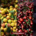 Turkije noteert hoogste landbouwinkomen in Europa