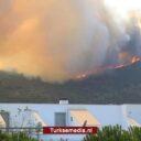 Klopjacht Turkije: 3 nieuwe arrestaties brandstichters bosbrand Muğla-Milas